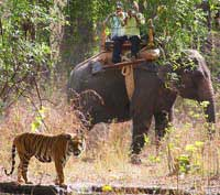 Bandhavgarh park india
