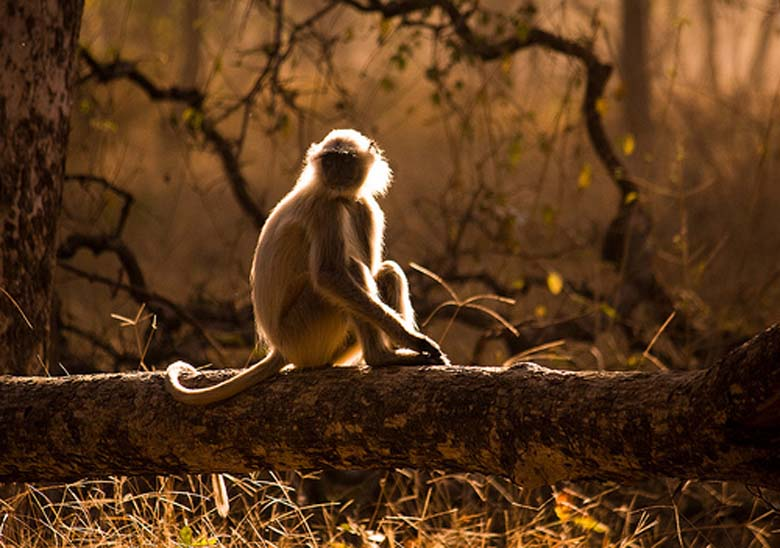 Pench India  city pictures gallery : Pench park INDIA