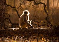 Pench park INDIA